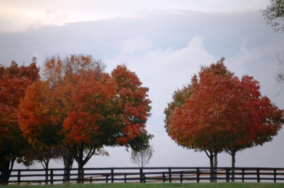Autumn Colors on a horse farm near Lexington, KY
