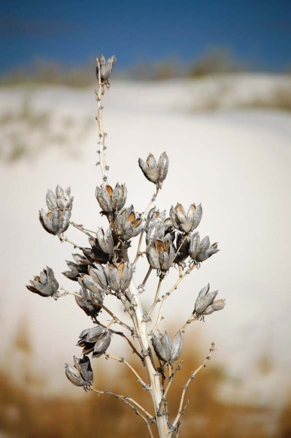 I really love the yucca against the white sand hills of White Sands National Monument