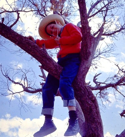 Another photo of me in a tree, probably 1964