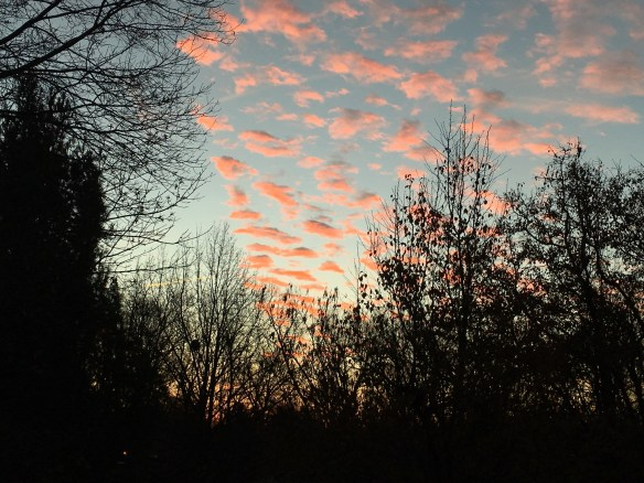 Pink clouds tinted by the early sunrise in Lexington