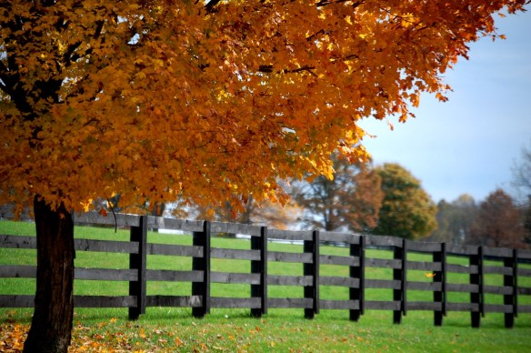 Fall colors in Horse Farm Country