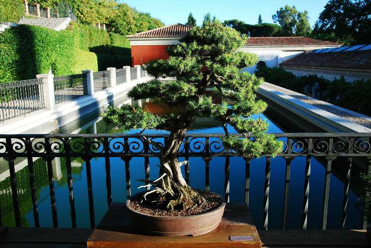bonsai placement outside in spring, summer and fall