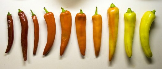 stages of colour to tell when banana peppers are ripe