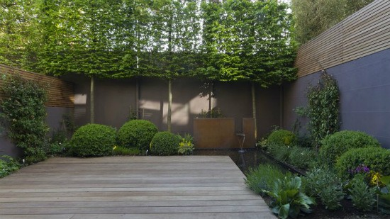 pleach trees for privacy from neighbours