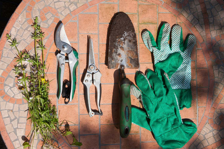 pruning tools needed for caring for knockout roses