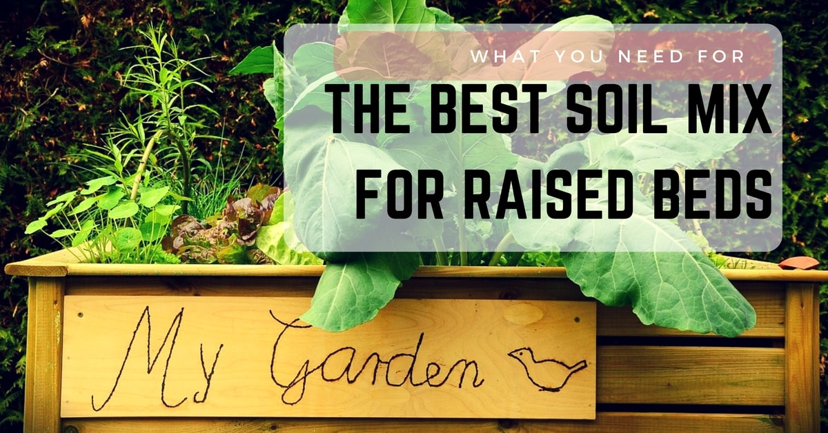 Vegetables Best Beds Raised