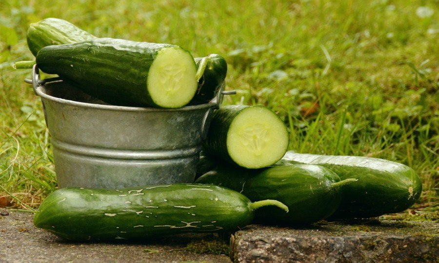 Cucumber is one of the best options that you have when it comes to the hydroponic garden