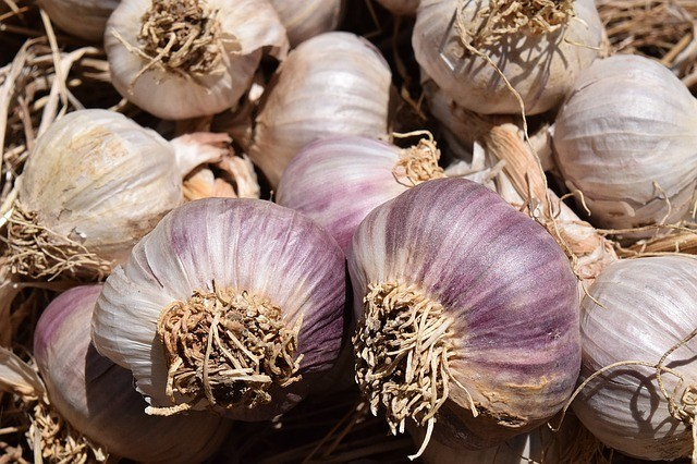 Purple Stripe Garlic​