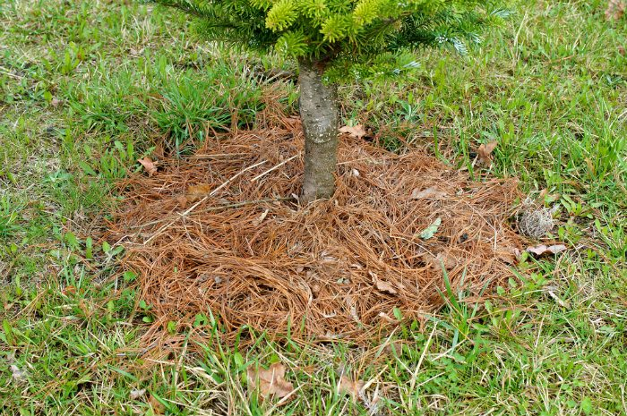 mulch act as a protective barrier