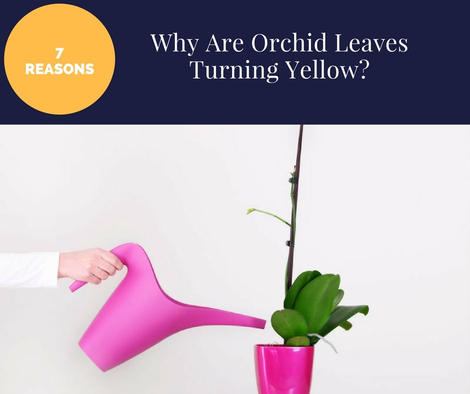 Led Grow Lights Orchids