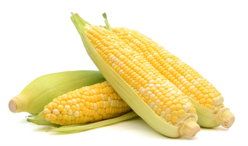 Pick the corn by twisting the corn off it's stalk