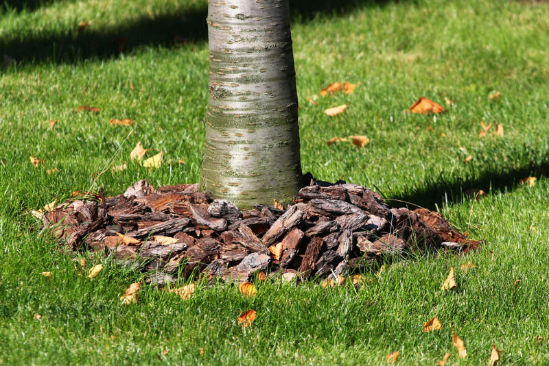 Bark Mulch for Your Garden