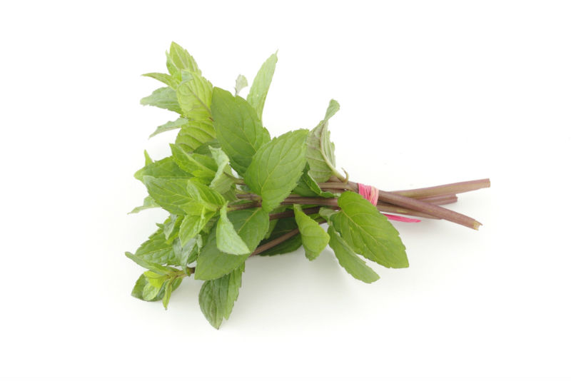 Use of peppermint fresh and dried