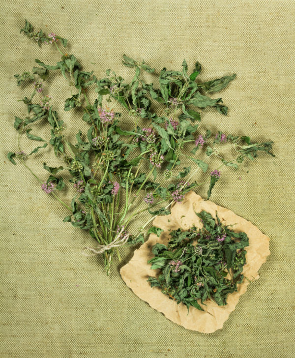 Spearmint uses fresh and dried
