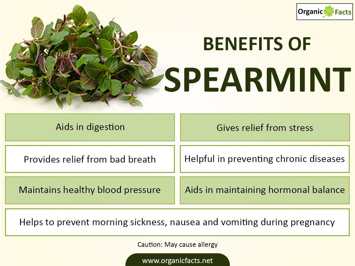 Spearmint's Health Benefits