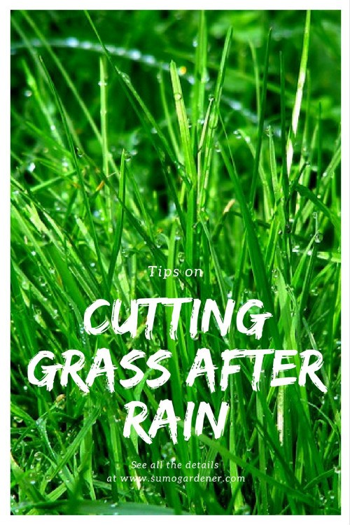 cutting grass when wet