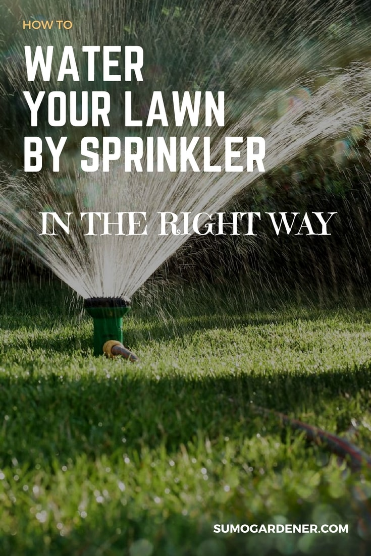 using water sprinkler the right way