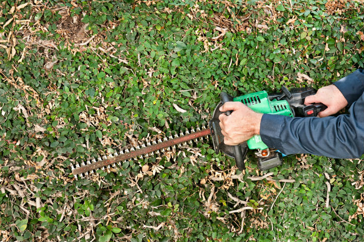 Best Gas Hedge Trimmer Blade