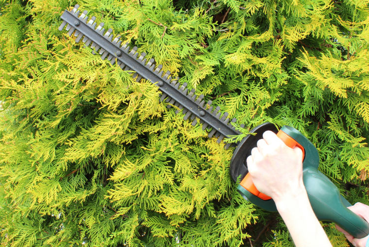 Best Gas Hedge Trimmer for the Money