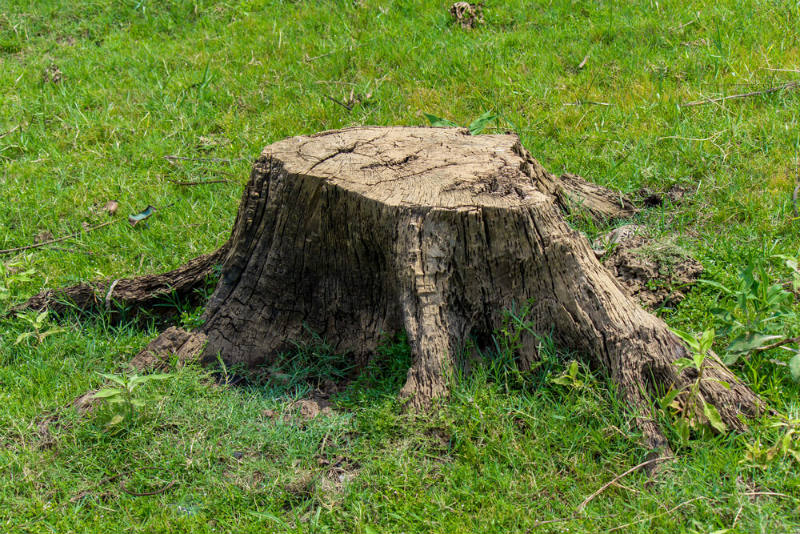 Safety Measures in Removing Tree Stump