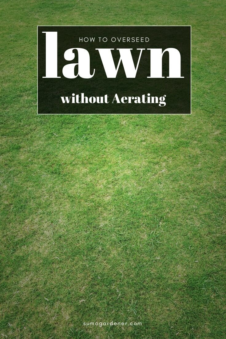 how to overseed lawn without aerating