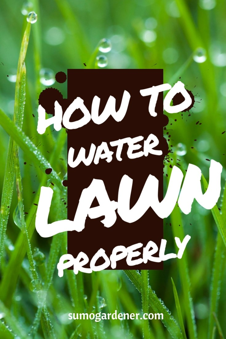 How to water lawn properly