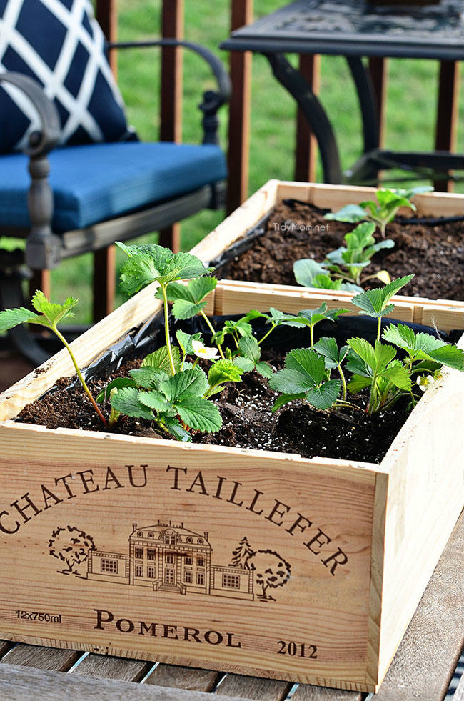 Wine crate as garden beds