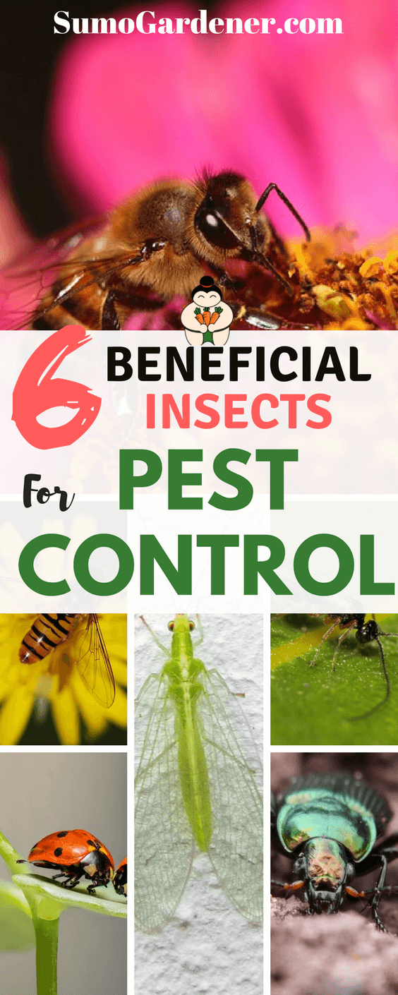 6 Beneficial Insects For Pest Control