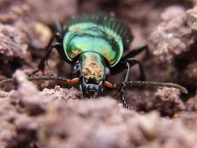 insects beneficial to your garden