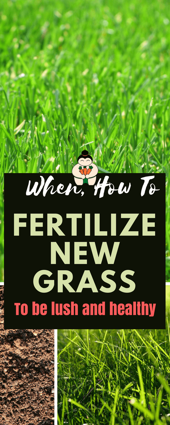 When To Fertilize New Grass?