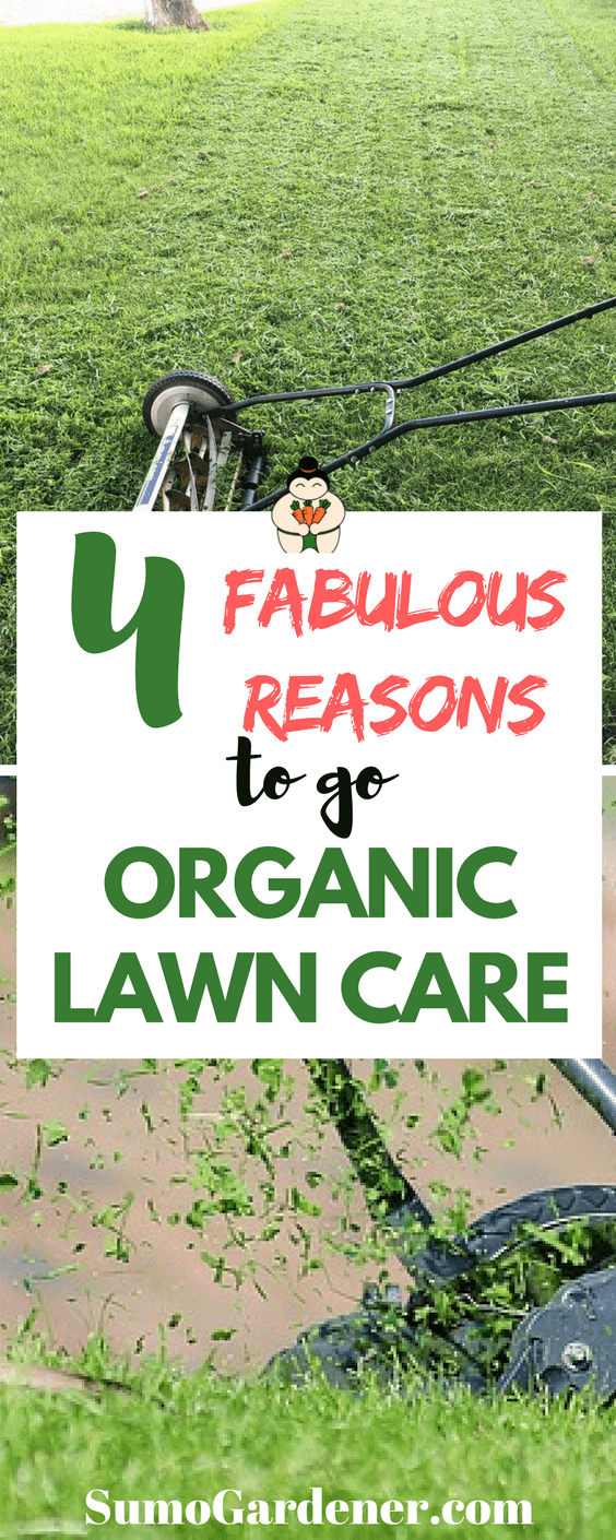 4 Fabulous Reasons To Go Organic Lawn Care