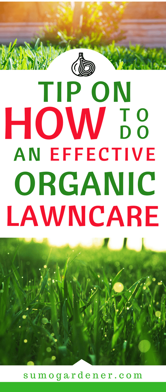 If you are one of the many people who is wondering how to do an effective organic lawn care, then you will surely find the information below beneficial.