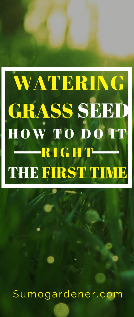 Watering grass seed isn't that complicated, but you have to remember you need to keep the ground moist at all times. That is the key to success.