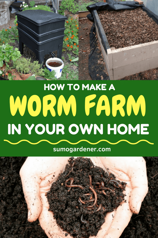 How to Make a Worm Farm In Your Own Home