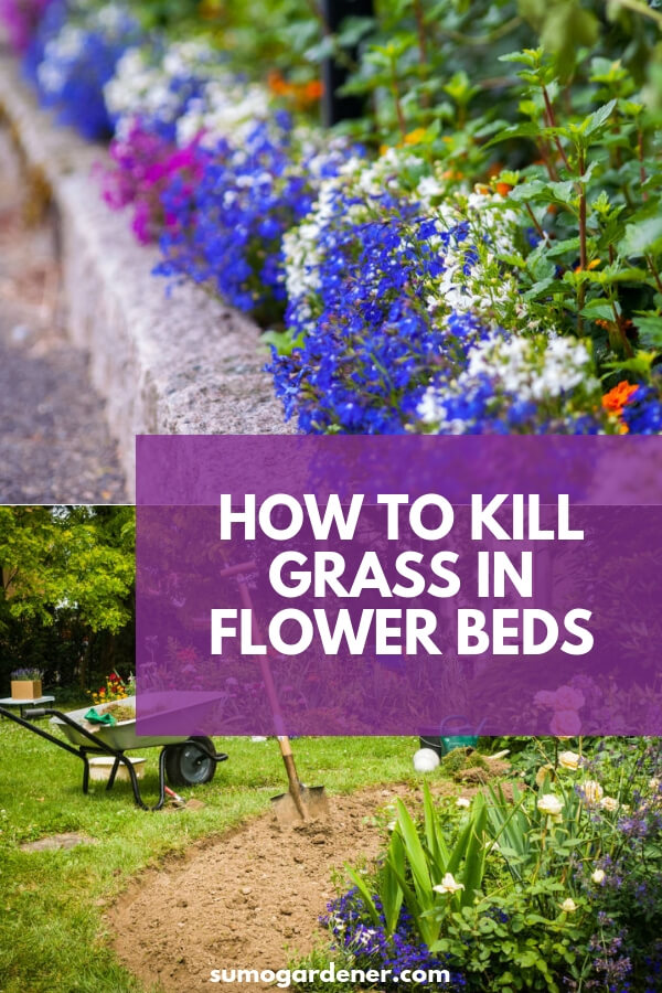 How To Kill Grass In Flower Beds What You Need To Know
