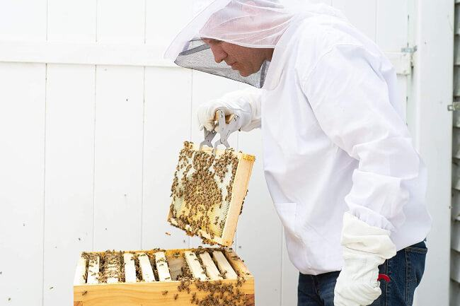 wearing beekeeper suit