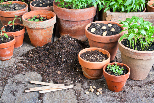 Gardening is all about planning your available space and choosing the right spot for your greenery