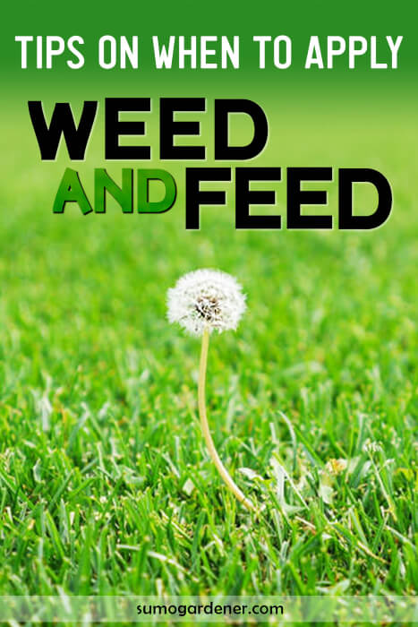 When To Apply Weed And Feed The Best Time And How To Apply