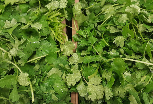 Coriander is full of vitamin A and has antifungal properties