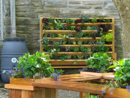 A vertical garden is a perfect choice if you are interested in growing a garden in your small resting space and on a budget