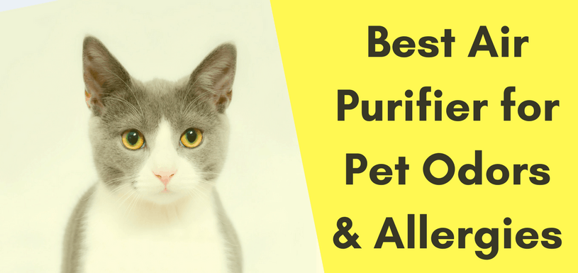 Best Air Purifier for Pet Odors & Allergies