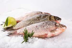 Fish and Seafood | Sump & Stammer GmbH | International Food Supply - Choose the fish and seafood specialties you prefer and get them delivered to wherever you are. Fish Whole - Fish Fillets - Seafood - Smoked Fish - Canned Fish