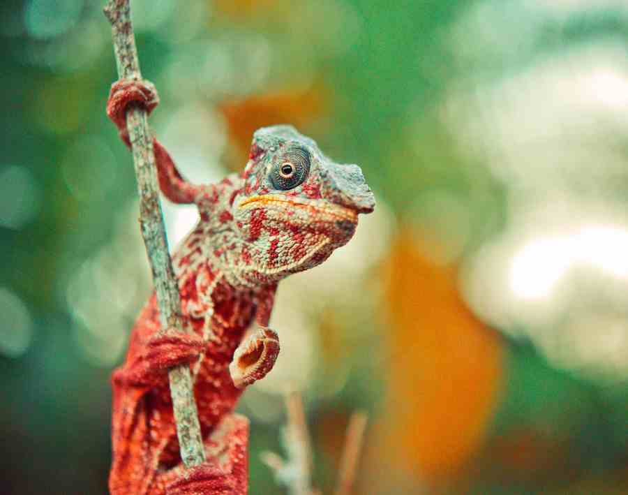 Reptile Care for Beginners: Simple Tips