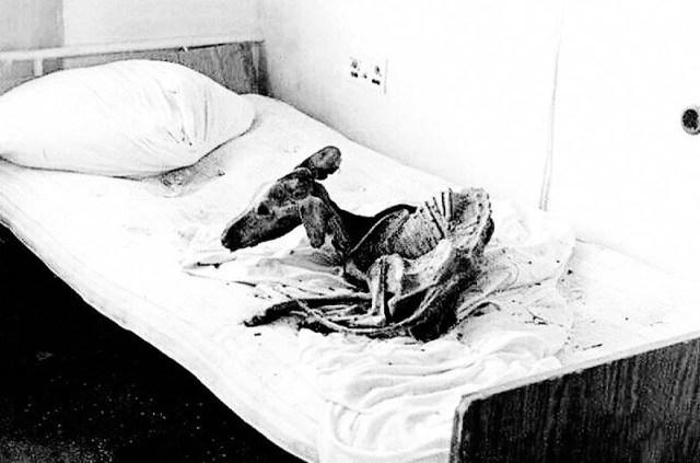 Скелет собаки в одной из покинутых квартир в Припяти. Пес так и не дождался своих хозяев. 27 апреля 1987г.