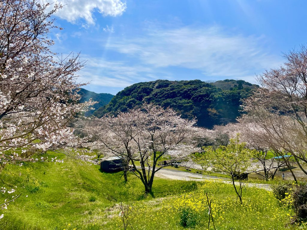 【国東市 安岐ダムいこいの広場】県内5番目に桜が多い隠れた桜の名所!自然の中でお花見やピクニックに♪