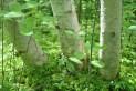 Quaking Bog 11