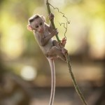 Disneynature Monkey Kingdom Review & Giveaway #MonkeyKingdomEvent