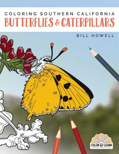 Cover for Coloring Southern California Butterflies and Caterpillars