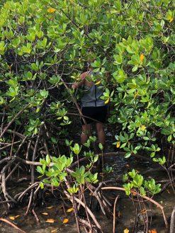 Volivoli Beach Resort - Fiji Day 2018 - Mangroves (4)