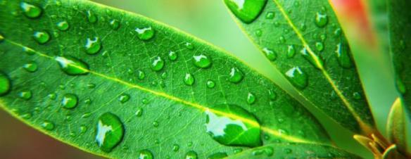 plantemonografi